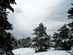 Raquetas-de-nieve-n-Belagua-Raquetas-de-nieve-en-Navarra-Elur-erraketak-Belagoan-Elur-erraketak-Nafarroan-Snowshoeing-in-Belagua-Snowshoeing-in-Navarra-Guías-de-montaña-Mendi-gidariak-14