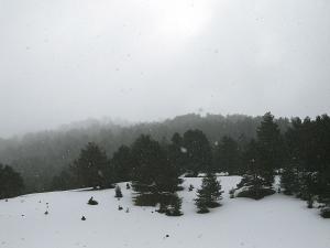 Raquetas-de-nieve-n-Belagua-Raquetas-de-nieve-en-Navarra-Elur-erraketak-Belagoan-Elur-erraketak-Nafarroan-Snowshoeing-in-Belagua-Snowshoeing-in-Navarra-Guías-de-montaña-Mendi-gidariak-20
