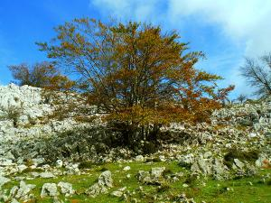 Senderismo-temático-Parque-Natural-de-Urkiola-Basque-Mountains-Mountain-Guides-59