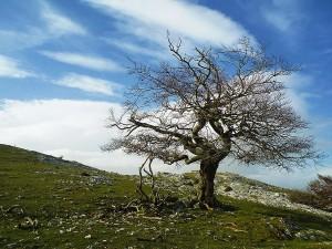 Urbasa-Turismo-Activo-Navarra-Senderismo-Aventura-Naturaleza-Travesia-1